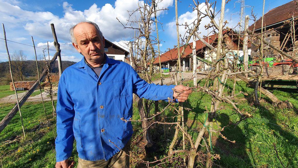 Janez Janša, sadjar iz Lesnega Brda.