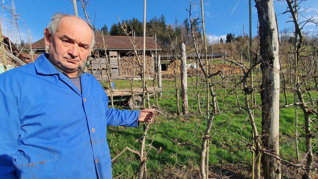 Na treh nasadih ob dobri letini pridelajo do 70 ton jabolk. Letos jabolk ne bo!