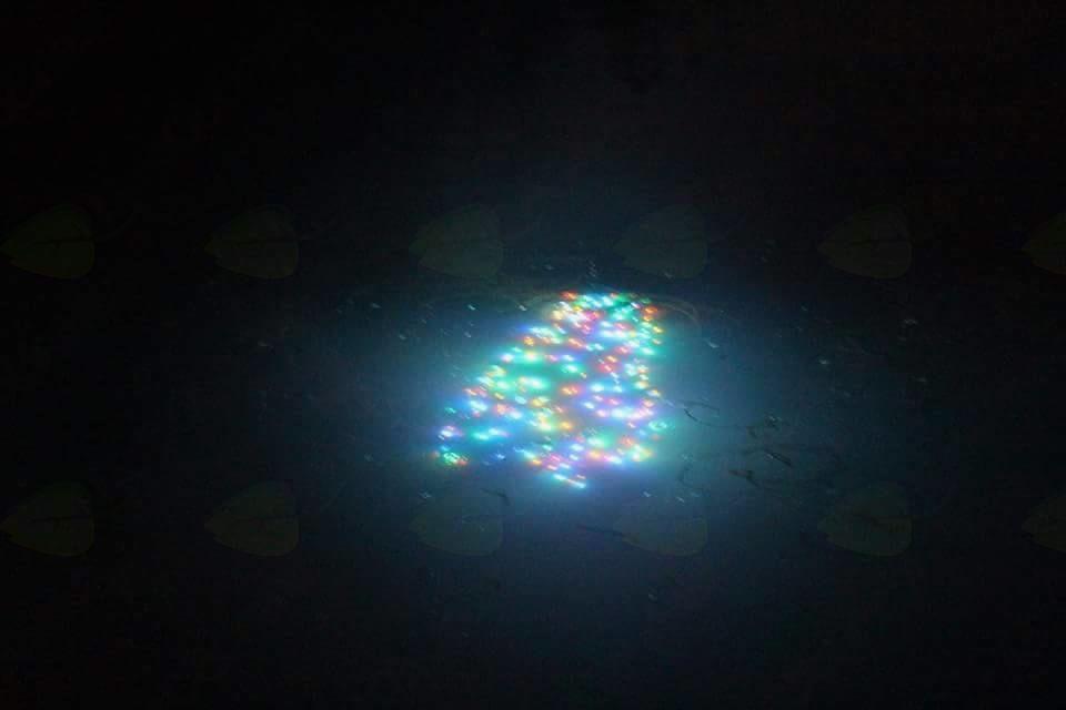 Potop božičnega drevesca