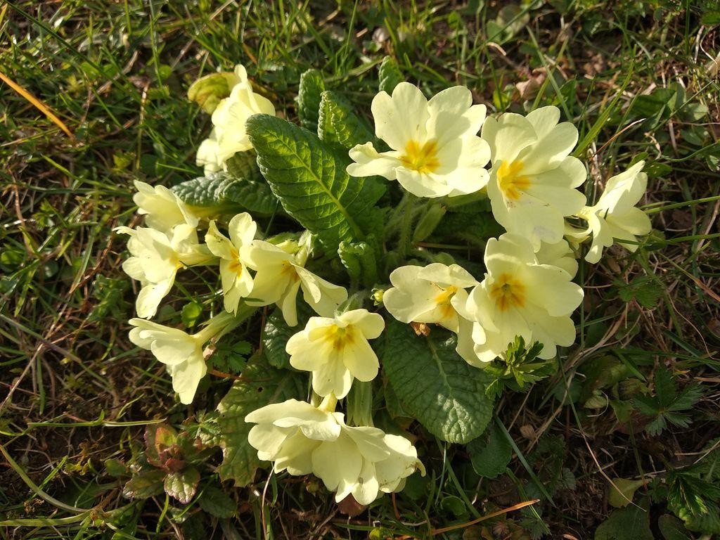 Trobentice na vrtu, KUD Kamot Zasip