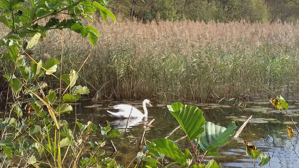 Interpretativni sprehod: Doživljanje prostora s petimi čuti - Ribniki v Dragi pri Igu