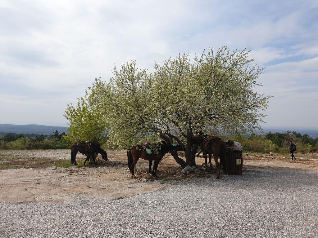 Konjeniške poti: rdeča nit med Vipavsko dolino in Krasom
