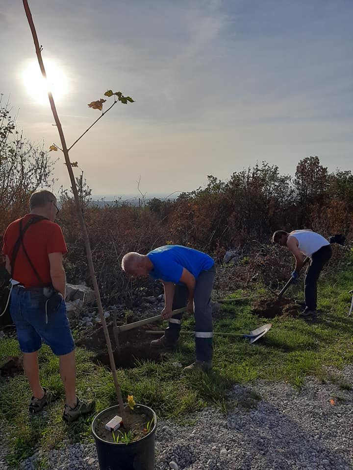 Srčna podpora lokalnih medijev v akciji Drevo za Cerje