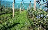 Borovnice in jagodičevje kot poslovna priložnost