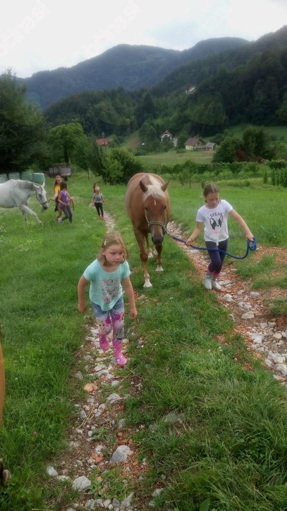 Iz dnevnika konjeniškega društva