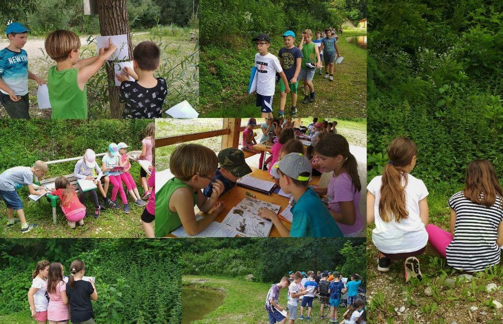 Šola v naravi v najboljši učilnici – v naravi