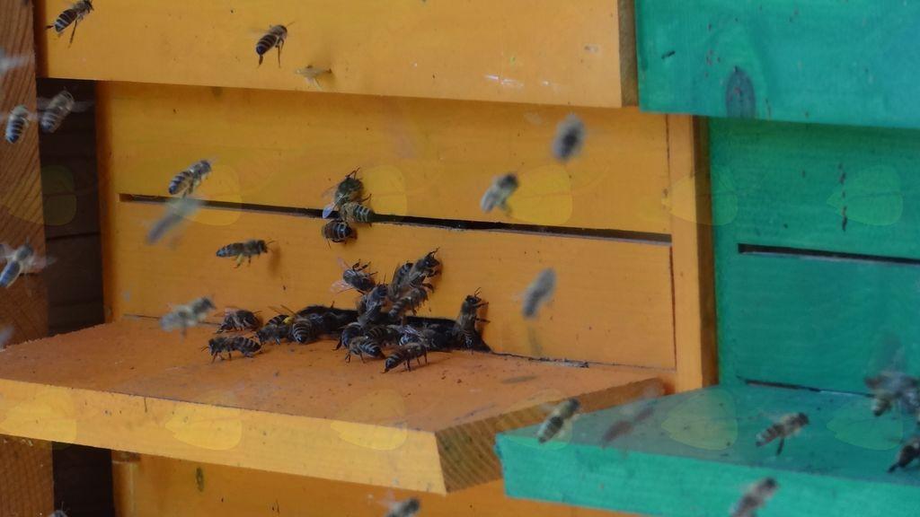 Čebele, naše prijateljice
