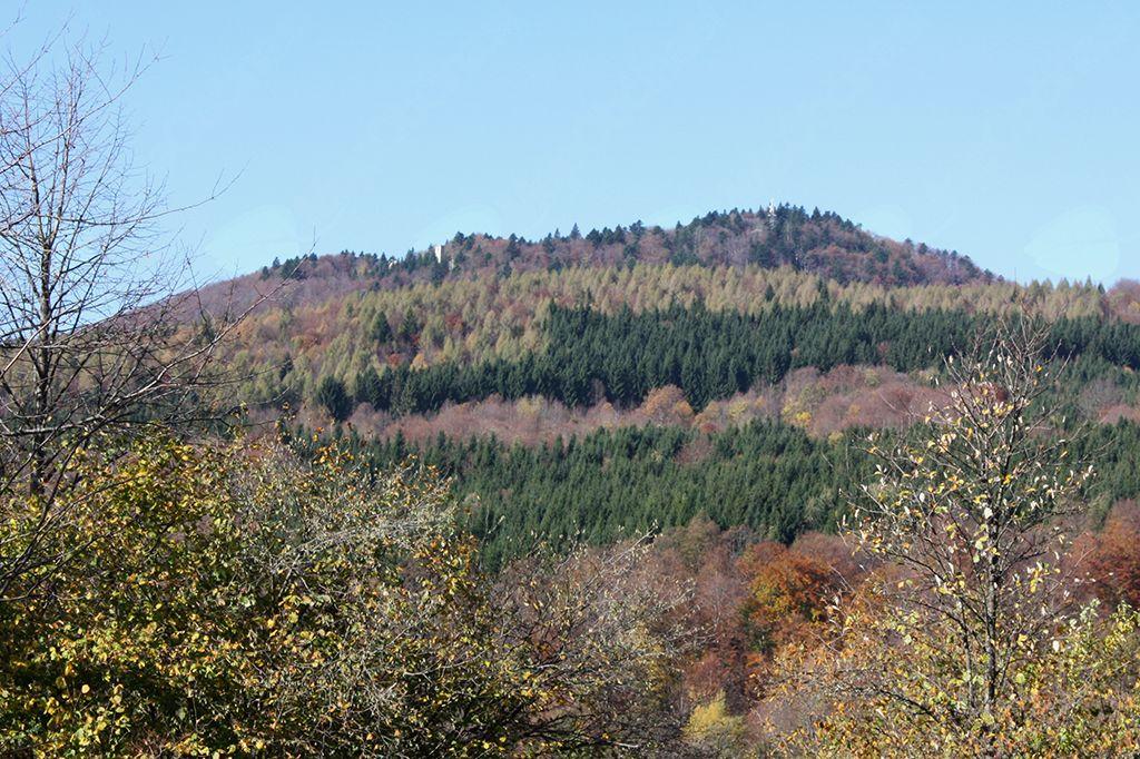 na pobočja Mirne gore, ki jih porašča pisana družba različnega drevja, delo gozdarjev preteklih obdobij