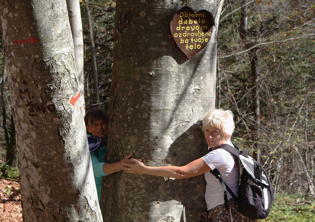 »Objemi debelo drevo in ozdravljeno bo tvoje telo« nam je sporočal napis na bukvi