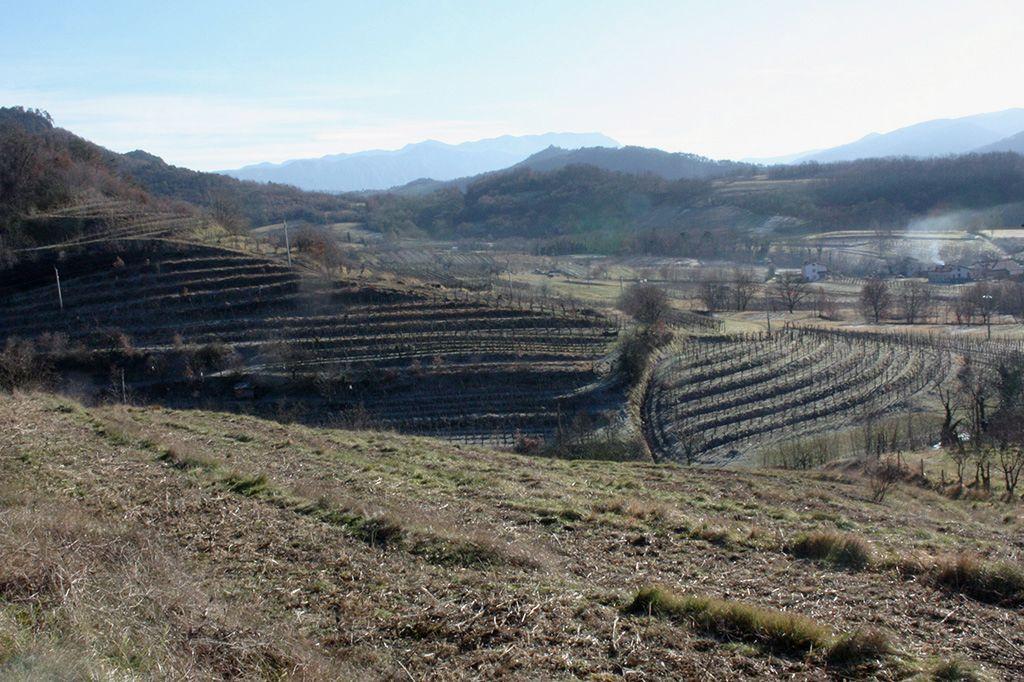 Na sončnih pobočjih se razprostirajo vinogradi