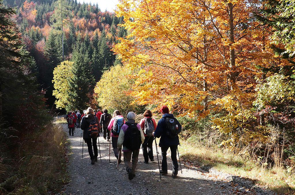Žareče barve jeseni so nas spremljale na poti proti Volovjeku