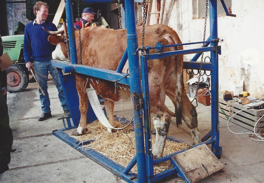 Jubilej bodo obeležili z razstavo govedi