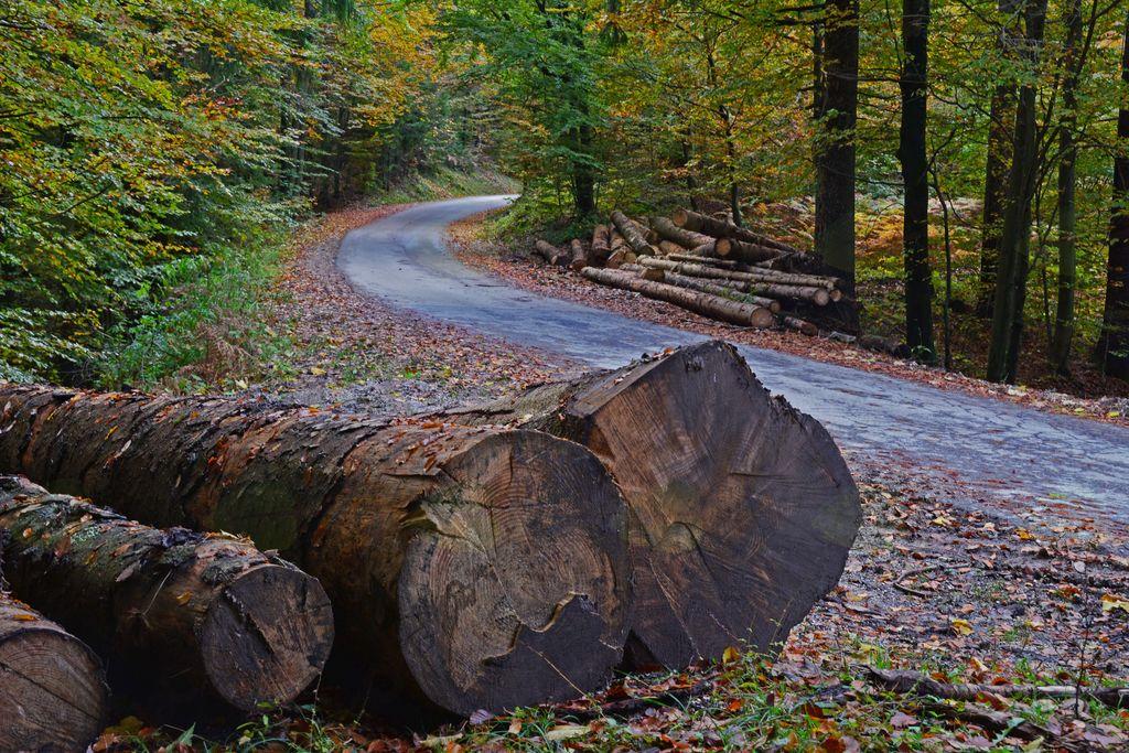 Promet z gozdnimi lesnimi sortimenti
