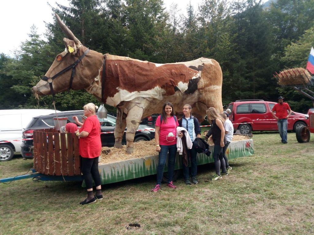 Poleg pravih krav je sprevod spremljala tudi 4-metrska dolgoletna kravja maskota