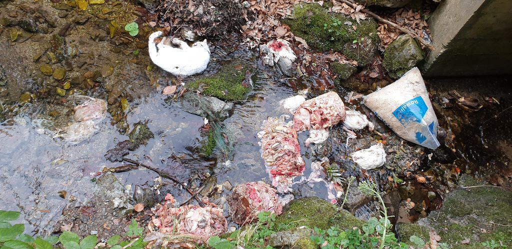 Nemarnež vrgel mrtvo mačko, piščance in drobovje kar v potok