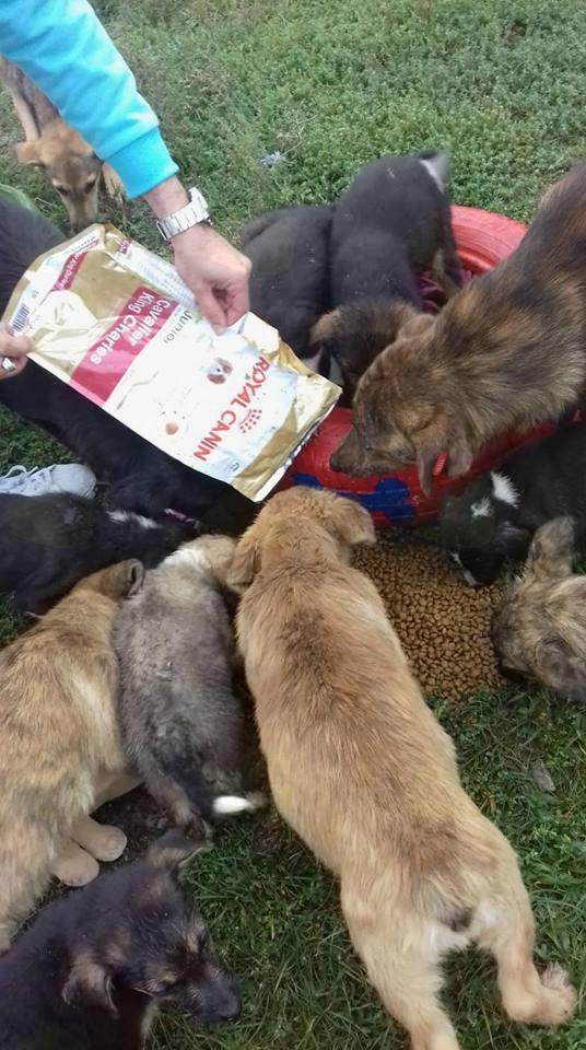 Zaključek humanitarne akcije,  zbrano preko 130 kg  130 kg hrana za zapuščene živali in predano 10 ležišč