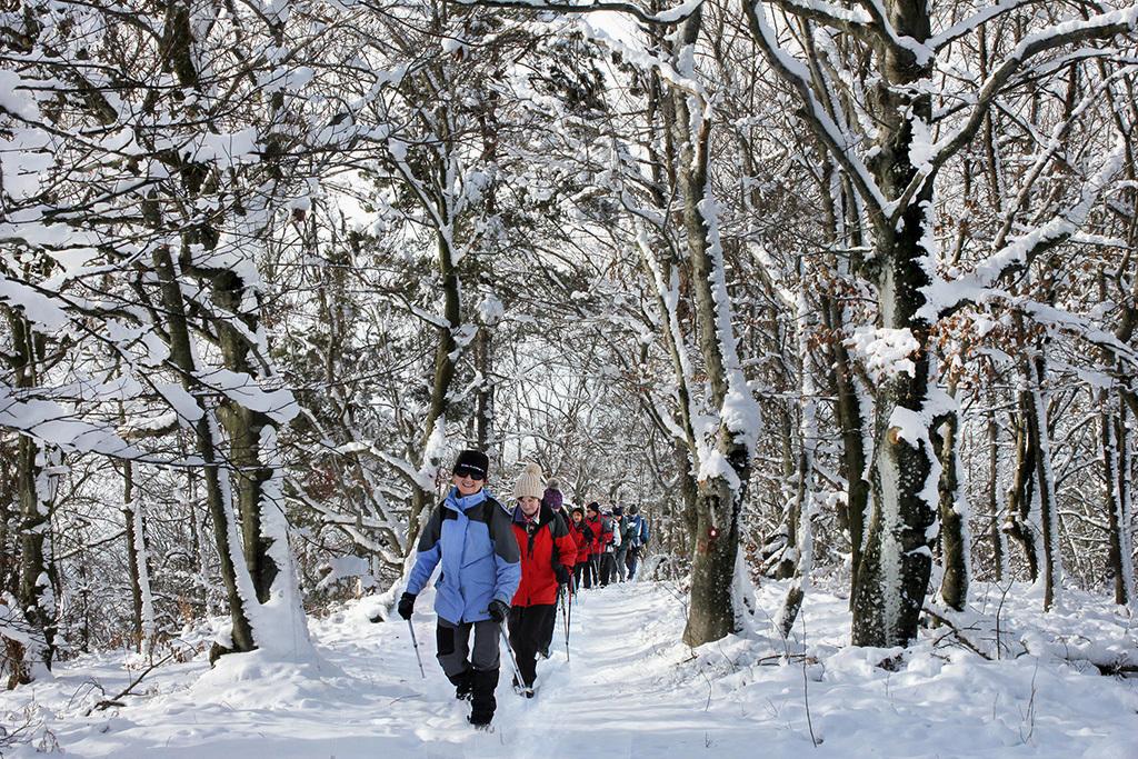 Uživali smo v hoji skozi zasnežen gozd (foto Tatjana Rodošek)