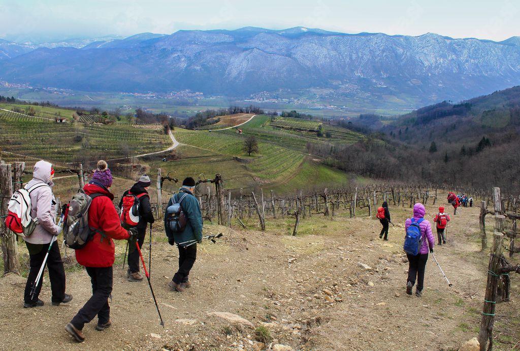 Ob spustu med trtami smo že začutili v Vipavski dolini napovedano burjo (foto Tatjana Rodošek)