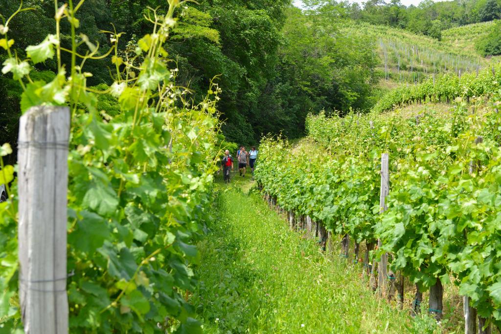 Pohod Med slapovi in vinogradi