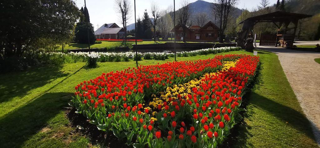 Tradicionalna razstava tulipanov v Mozirskem gaju vabi