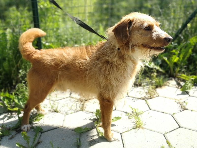 V Andražu nad Polzelo našli izgubljenega psa