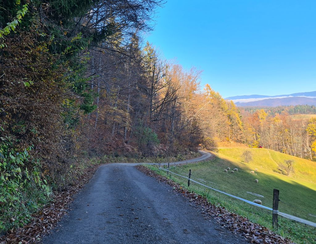 Vzdrževalna dela na gozdnih cestah