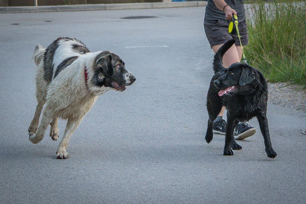 Psi brez lastnikovega nadzora