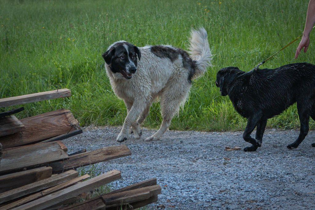 Psi brez nadzora lastnika