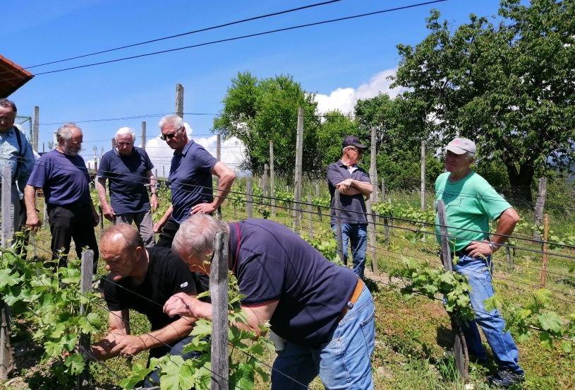 Seznanjanje z novostmi pri zelenih  delih v vinogradu