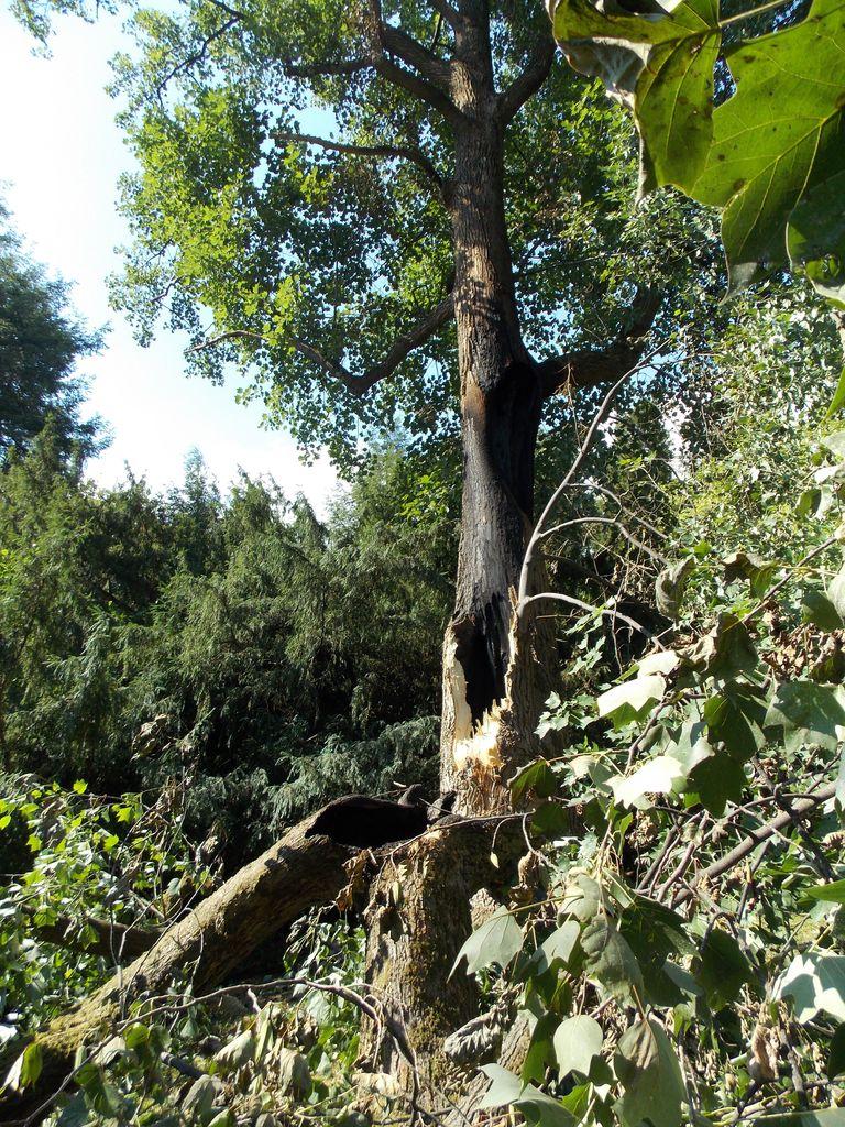 Park Šenek, eden izmed redkih prenovljenih v Sloveniji