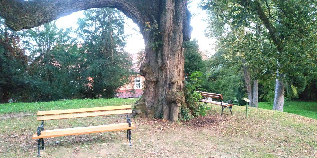 Obnovljene Klopi v Parku Šenek