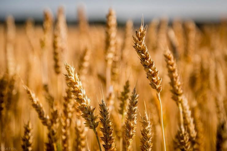 Glavni način zdravljenja celiakije je brezglutenska dieta, pri kateri izločimo vsa žita, ki vsebujejo gluten.