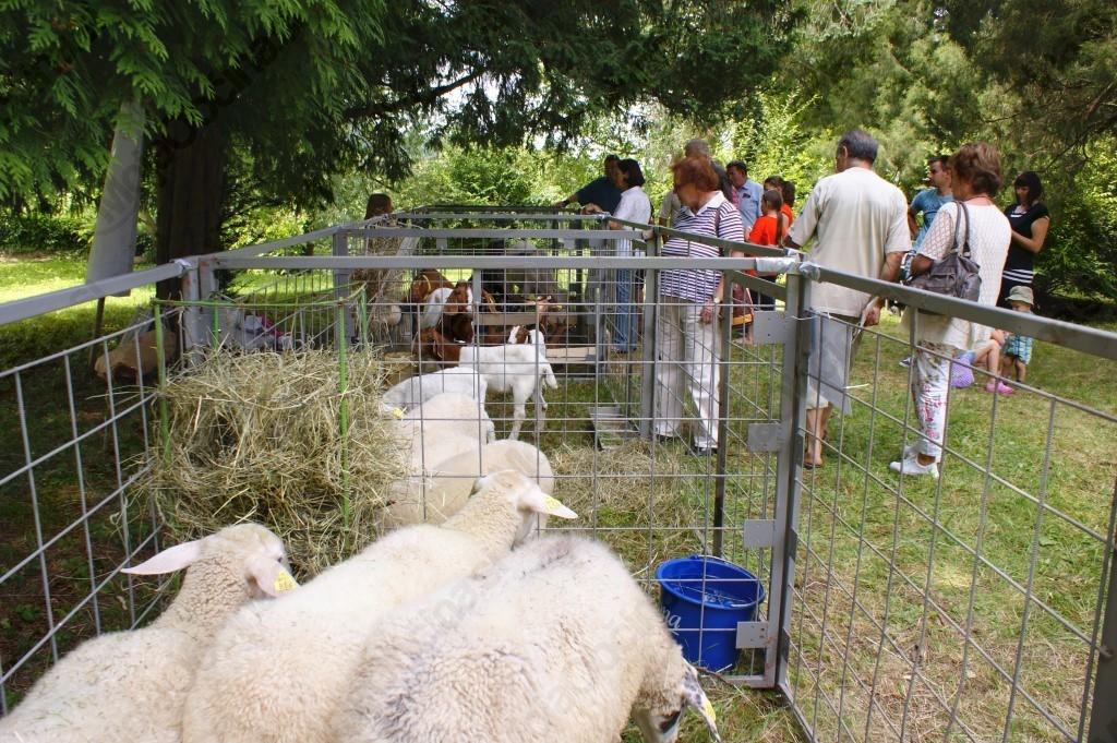 14. Ovčji kozji bal - grad Borl
