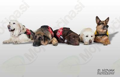 Predstavitev Kinološkega društva za reševalne pse Maribor