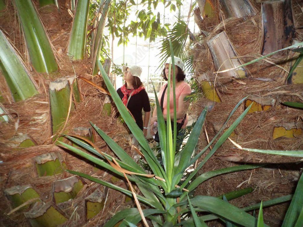 V botaničnem vrtu