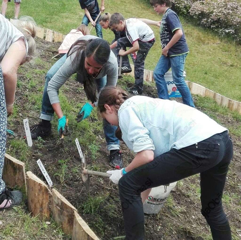 Osnovnošolci uredili in zasadili zeliščni vrt