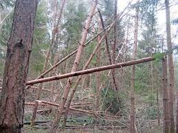 Poziv lastnikom gozdov - pomoč preko javnih del