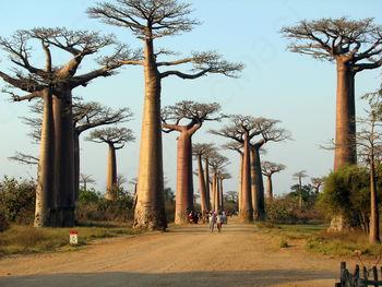 Z Dobena na MADAGASKAR IN REUNION