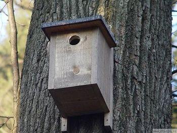 Gnezdilnice za ptice - izdelava in nameščanje