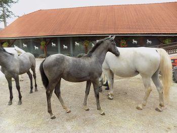 Izlet Društva konjerejcev in konjenikov Sevnica
