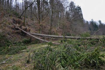 Vremenske razmere ovirajo sanacijo gozdov