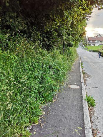 Obrezovanje vegetacije ob cestiščih in pločnikih je v poletnih mesecih še posebej pomembno