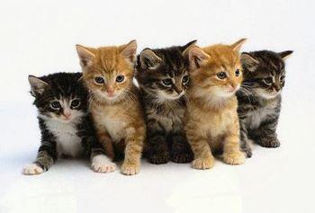 Javni poziv za sterilizacijo in kastracijo mačk v Občini Horjul v letu 2018