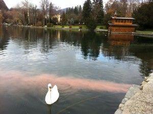 Kanalizacijski sistem Bled - Gorje nima iztoka v jezero, kaj ali kdo ga potem ogroža?