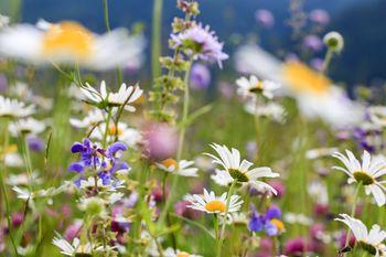 15. Mednarodni Festival Alpskega cvetja