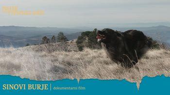 Dokumentarni film: Sinovi burje | Poletje v Vipavskem Križu 2021