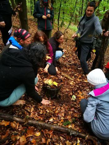 Nazaj k naravi z Inštitutom za gozdno pedagogiko
