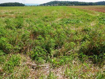 Ambrozija na zemljiščih v občini Ig