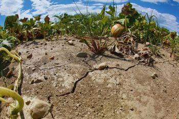 Podaljšan rok za ocenjevanje škode v kmetijstvu zaradi posledic suše v letu 2017