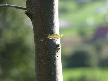 Sanacijska in redna rez sadnega drevja